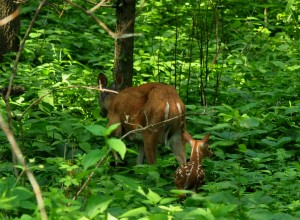 5 Moving On - doe & fawn