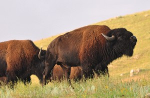 2.1 Roaring Bull - Custer SP