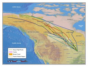 9.4 - Radioed Scaup Routes - Map Prepared By Ducks Unl.