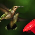 Hummingbirds – Gone But Not Forgotten