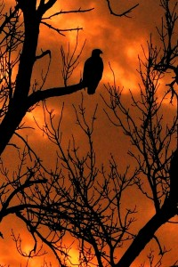 sunset-roost