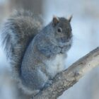 Iowa Squirrels Offer Unique Outdoor Taste Treat