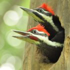 Living With Woodpeckers