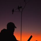 Iowa Dove Season Opens September 1st