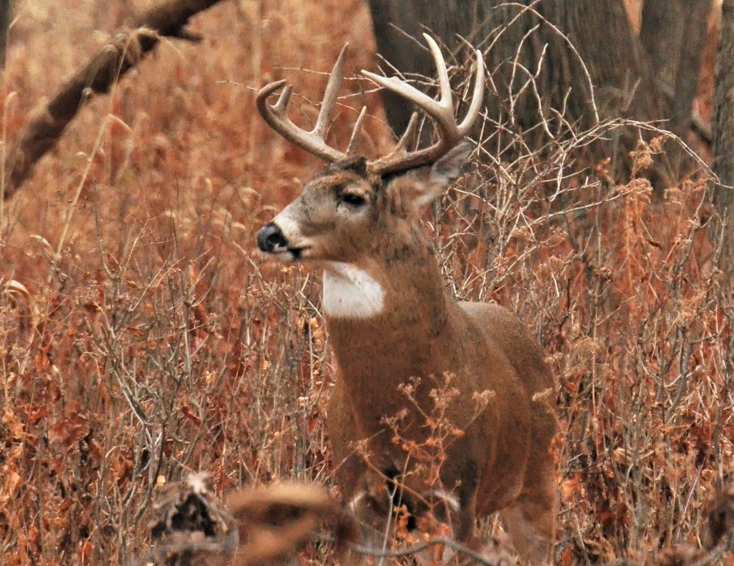 fbfdedcbca378 Deer hunters follow many paths to success. Some hunters carry bows. Others  favor firearms. Some dress in camouflage and sit in trees.