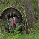 Muzzleloader Turkey Hunt Goes Full Circle