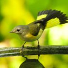 Fall Warblers Present Ultimate Birding Challenge