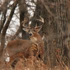 Recollections of a Young Hunter's First Buck