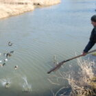 Iowa's trout anglers flocking to northeast Iowa streams