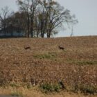 Guttenberg Press Deer Season Outlook
