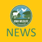 EHD suspected in deer deaths